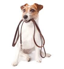 leash dog 2