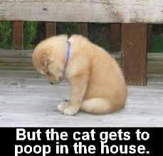 puppy potty cat poop