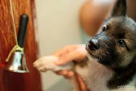 puppy potty ringing bell
