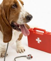 pet first aid kit ideas Wagging Tails Pet Sitting & Mobile Grooming in CT