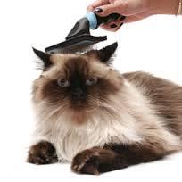 cat brushed