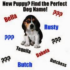 new puppy name Wagging Tails Southington Connecticut