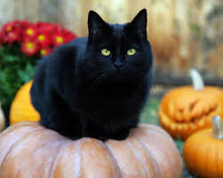 black cat on pumpkin Wagging Tails Pet Sitting Connecticut
