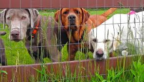 dog fence Wagging Tails Pet Sitting & Mobile Grooming Connecticut
