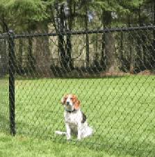 dog with fence