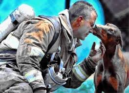 dogs from sept 11