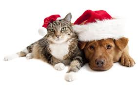 pet christmas photo