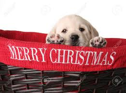 Merry Christmas Wagging Tails Pet Sitter in CT Mobile Groomer in CT