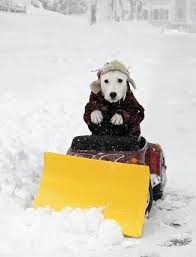 dog on snow plow