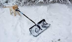 dog shoveling snow