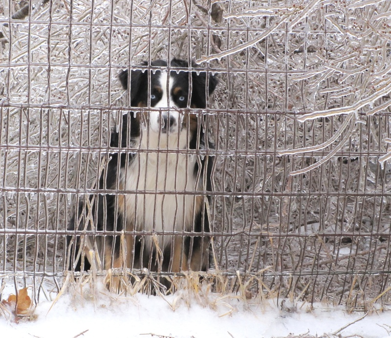 ice storm and blizzard Wagging Tails Pet Sitting & Mobile Grooming
