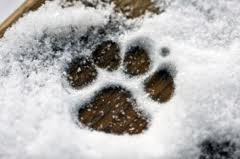 wagging Tails pet sitter and mobile groomer in ct
