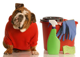 spring cleaning bulldog Wagging Tails