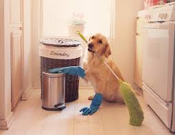 spring cleaning golden retriever Wagging Tails Pet Sitting & Mobile Grooming in CT