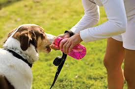 dog water bowl Wagging Tails pet sitter mobile groomer cheshire ct