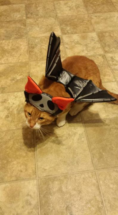 bat-cat-costume-wagging-tails-ct