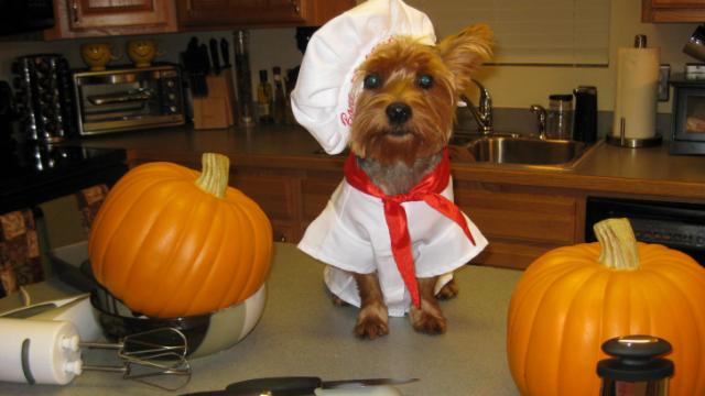 chef-dog-halloween-wagging-tails-pet-sitting-mobile-grooming-dog-walking-cat-sitting-southington-ct