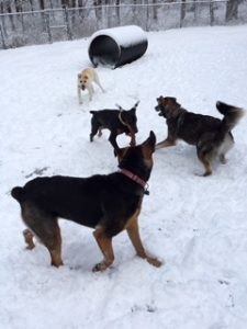Wagging Tails dog boarding kennel in ct